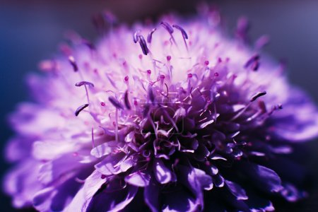 Profile of blooming purple aster background