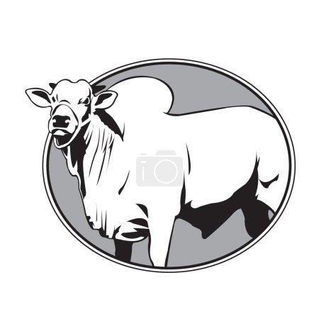 Bull zebu vintage logo...