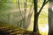 Fog in the forest at morning
