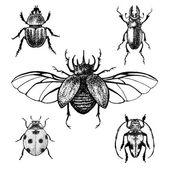 Hand drawn beetles set