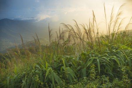 Photo pour Paysages naturels dans le parc national de phusoidao en Thaïlande - image libre de droit