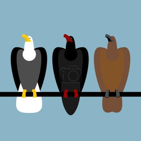 Set eagles birds of prey. Quick Bald eagle with white head. Big
