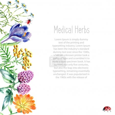 Illustration for Hand drawn watercolor botanical illustration. Medical herbs drawing isolated on the white background. Medical herbs illustration, herbarium banner.vector - Royalty Free Image
