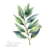 Watercolor bay leaf