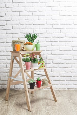 Photo for Succulents, house plants in colorful pots - Royalty Free Image
