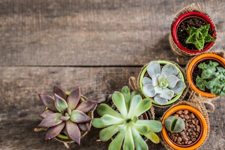 Photo for Succulents, house plants in colorful pots on wooden background - Royalty Free Image