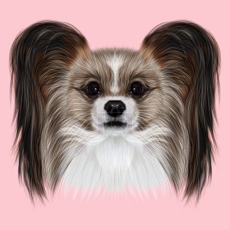 Illustrated Portrait of Papillon dog.