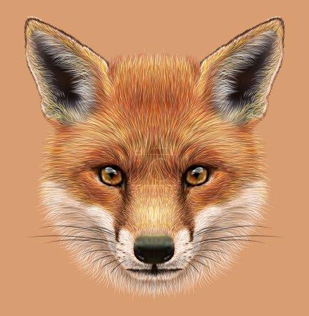 Photo pour Le joli visage de moelleux de forêt Fox - image libre de droit