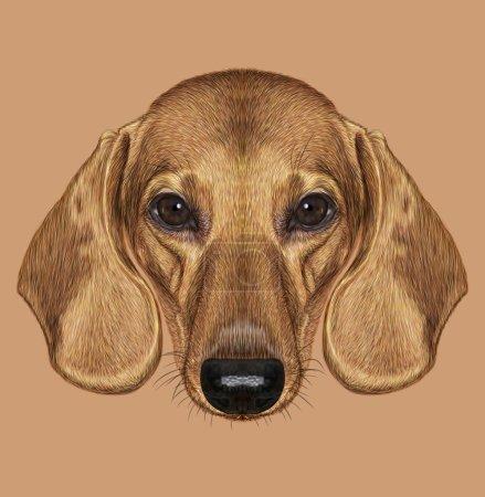 Illustrated Portrait of Dachshund Dog