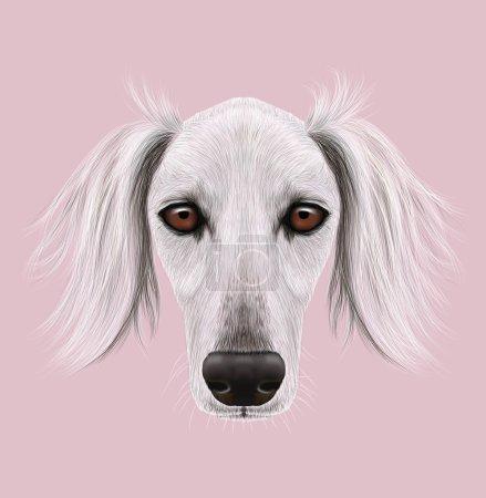 Illustrated Portrait of Saluki Dog