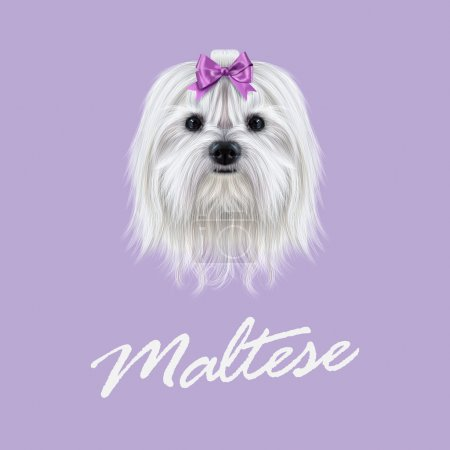 Vector Illustrated portrait of Maltese dog.