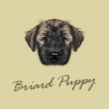 Vector Illustrated Portrait of Briard puppy.