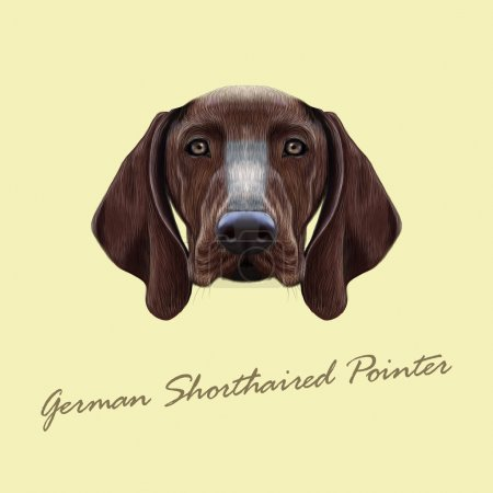 Vector Illustrated portrait of German Shorthaired Pointer dog.