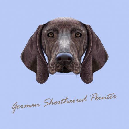 Vector Illustrated portrait of German Shorthaired Pointer dog