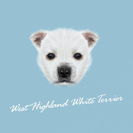 Vector Illustrated Portrait of West Highland White Terrier.