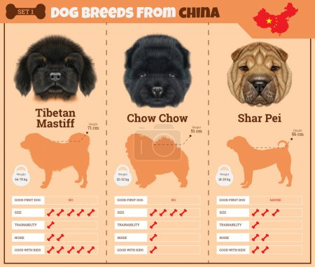 Illustration for Dogs breed vector infographics types of dog breeds from China. Breed Set 1 - Tibetan Mastiff, Chow Chow, Shar Pei - Royalty Free Image