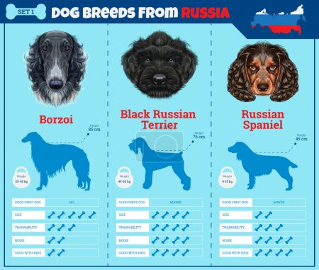 Dogs breed vector infographics types of dog breeds from Russia.