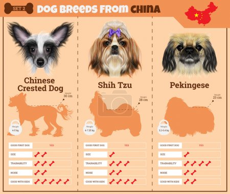 Illustration for Dogs breed vector infographics types of dog breeds from China. Breed Set 2 - Chinese Crested Dog, Shih Tzu, Pekingese - Royalty Free Image