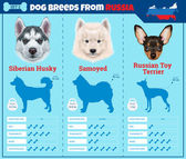Dogs breed vector infographics types of dog breeds from Russia