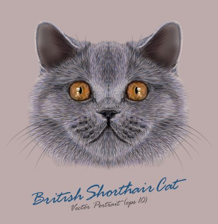 Illustration pour British short air chat animal joli visage. Vector heureux portrait de tête de chaton britannique argenté. Portrait réaliste en fourrure des yeux de tonnelier britannique minou - image libre de droit