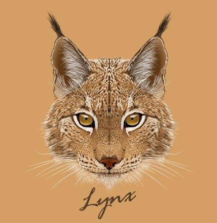 Illustration pour Face d'animal Lynx. Portrait vectoriel de tête de chat lynx eurasien. Portrait réaliste en fourrure de lynx sauvage chat de taille moyenne - image libre de droit