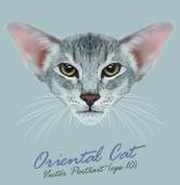 Oriental purebred cat animal cute face Vector happy gray tabby oriental kitten head portrait Realistic fur portrait of oriental green eyes kitty isolated on blue background