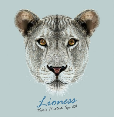 Illustration for Lioness animal cute face. Vector African wild lion cat head portrait. Realistic fur portrait of liones - Royalty Free Image