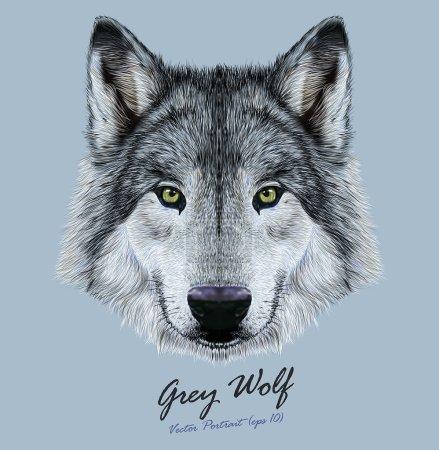Illustration pour Visage de loup. Tête grise effrayante. Portrait réaliste de loup sauvage gris fourrure - image libre de droit