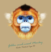 Golden snub-nosed monkey wild animal blue face Vector Asian Chinese Japanese funny red-haired head primate portrait Realistic fur portrait of jungle golden ape isolated on tan background