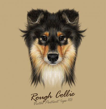 Vector Illustrative Portrait of Collie Dog