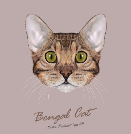 Illustration for Bengal cat animal cute face. Vector young brown tabby purebred American Bengal kitten orange head portrait. Realistic fur portrait of green eyes kitty - Royalty Free Image