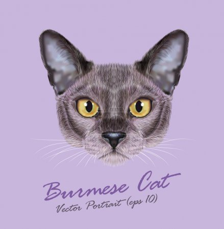 Vector Illustrated Portrait of Burmese cat.