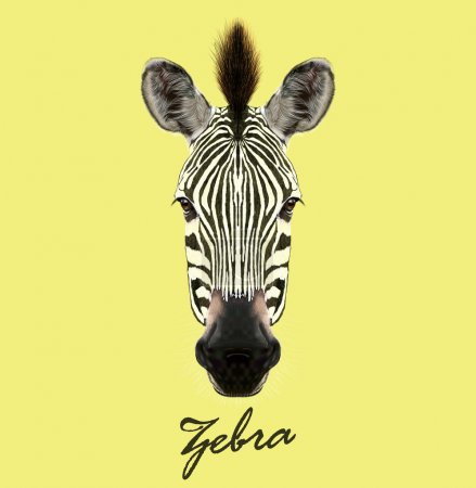 Illustration for Zebra wild animal face. Vector cute African safari black and white Zebra head portrait. Realistic fur portrait of beautiful striped savannah Zebra - Royalty Free Image