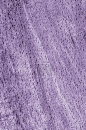 Old Beech Wood Bleached and Stained Purple Grunge Texture Sample