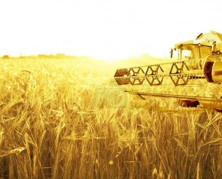 Harvesting machine on wheat field