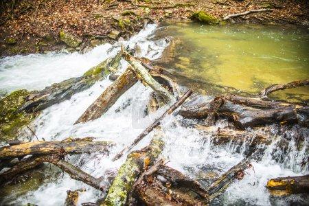 Water stream flowing under trunks