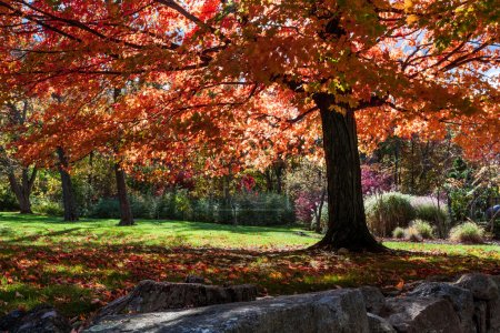 Tree with red fall foliage