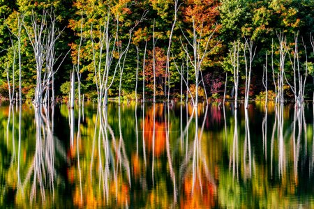 Fall reflections and a flooded forest