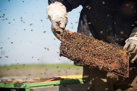 beekeepr keeping a honeycomb in his hands