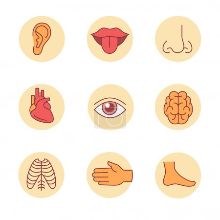 Illustration for Medical icons thin line set. Human organs, senses, and body parts. Flat style color vector symbols isolated on white. - Royalty Free Image