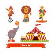 Circus animals bear lion elephant