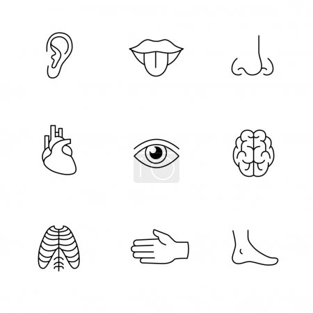 Illustration for Medical icons thin line art set. Human organs, senses, and body parts. Black vector symbols isolated on white. - Royalty Free Image