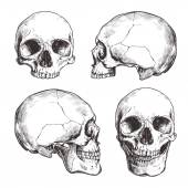 Collection Of Hand Drawn Skulls In Monochrome Vector Skulls Illustrations