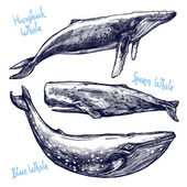 Whales Set Collection Of Different Hand Drawn Whales