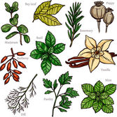 Sketch Herbs And Spices Colorful Collection Vector illustration
