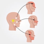 The trigeminal nerve Human head Flat illustration