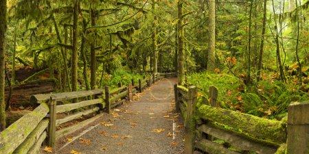 Camino a través de la exuberante selva tropical, Cathedral Grove, Isla de Vancouver ,