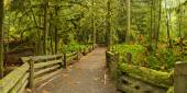 Path through lush rainforest, Cathedral Grove, Vancouver Island,