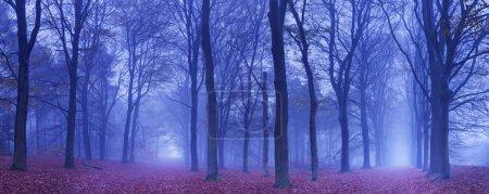 Photo pour Une fourchette dans un chemin dans une forêt sombre et brumeux. Photographiée à l'aube. - image libre de droit