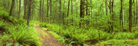 Camino a través de la exuberante selva tropical, Columbia River Gorge, Oregon, EE.UU.